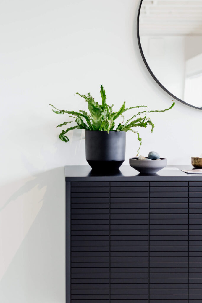 Plants sit on a cabinet in a studio in  Victoria, BC.