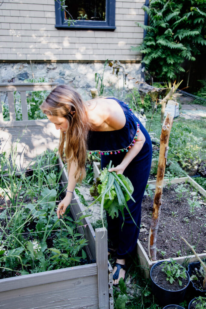A woman picks fresh greens in a garden in Victoria, BC